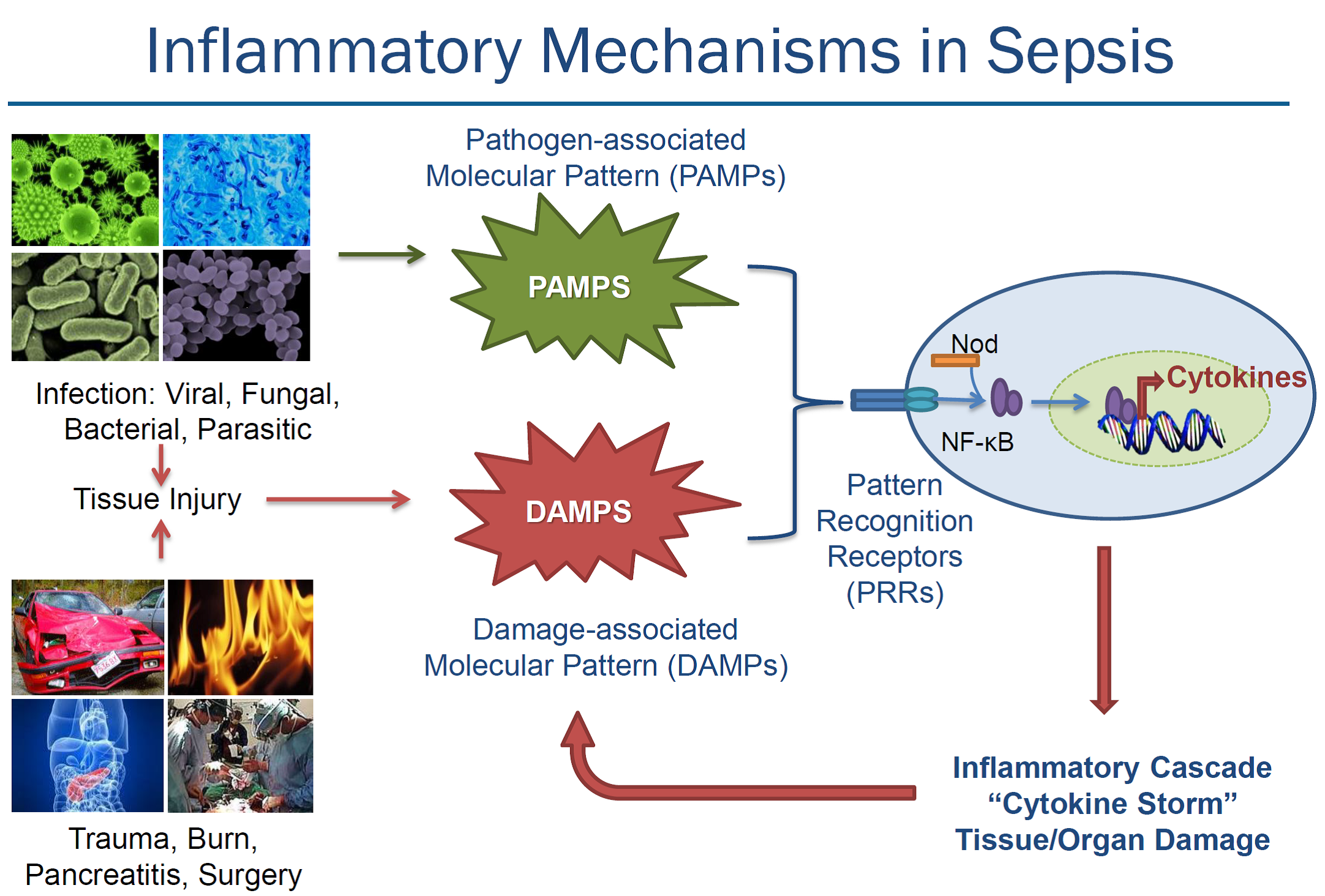 inflammatory-mechanisms-in-sepsis